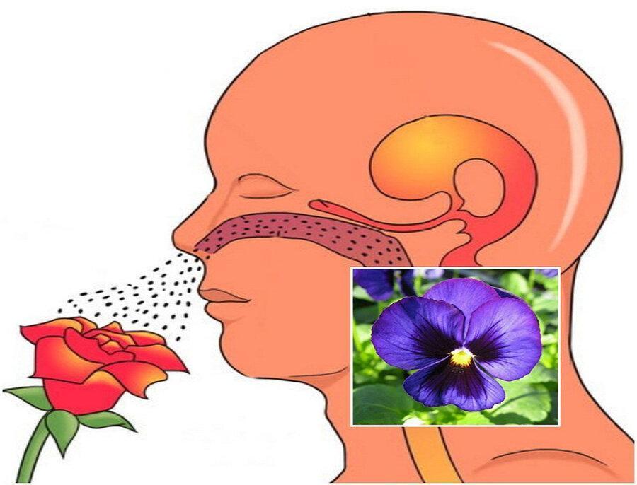 کرونایی ها چگونه حس بویایی خود را تقویت نمایند؟