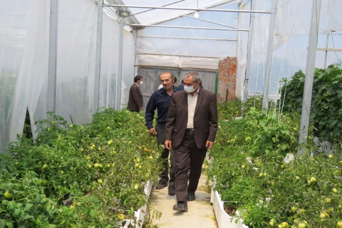 خبرنگاران حمایت از طرح های کشاورزی زمینه ساز توسعه و اشتغال پایدار است