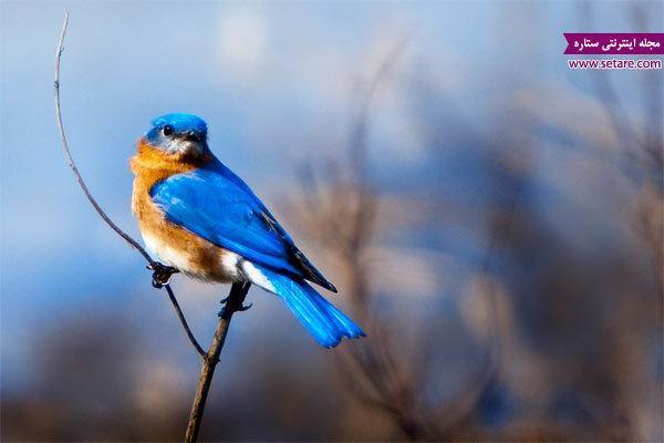 تست روانشناسی جالب پرنده آبی (شناخت احساسات)