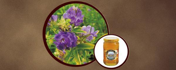 خواص عسل یونجه در درمان بیماری ها