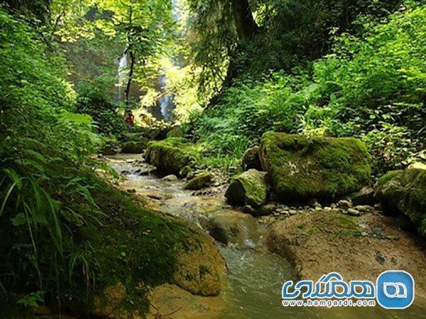 جنگل انجیلی و آبشار ولیلا؛ زیبایی هایی بی بدیل در بطن مازندران