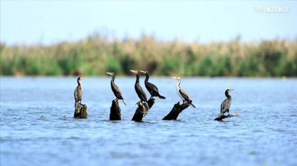 نزدیک به 100 گونه پرنده مهاجر تا به امروز در استان اردبیل شناسایی شده است
